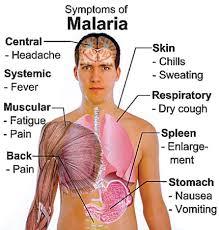 Antimalarial Drug Action