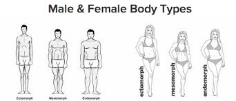 Endomorph Nutrition and Workout Plan