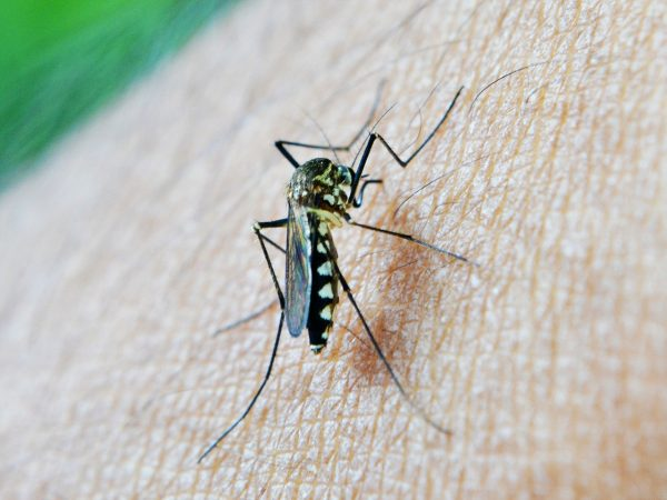 Aerial spraying to combat mosquitoes linked to increased risk of autism in children