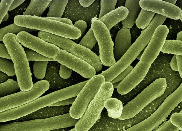 Gut bacteria may predict risk of life-threatening infections following chemotherapy