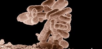 Gut Bacteria Promotes Spinal Cord Injury Healing