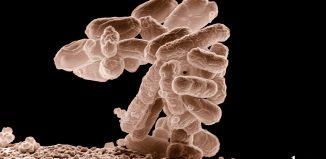 Gut Bacteria Promotes Spinal Cord Injury Healing