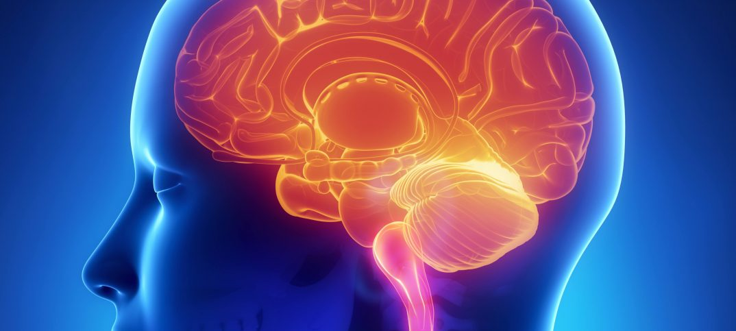 New Gene Regulation Essential for Proper Brain Functioning