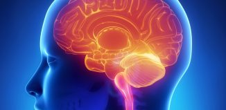 New Gene Regulation Essential for Proper Brain Functioning