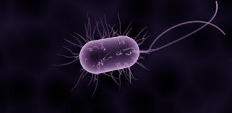 Bacterial Secret Code Responsible For Antibiotic Resistance