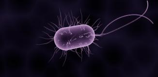 Bacterial Secret Code Responsible For Antibiotic Resistance